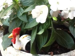 FOTO 3:  En el jardín de su corral.