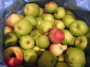 Nuestro ingrediente estrella:  Manzanas de Muskiz