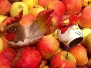 En la recogida de manzanas