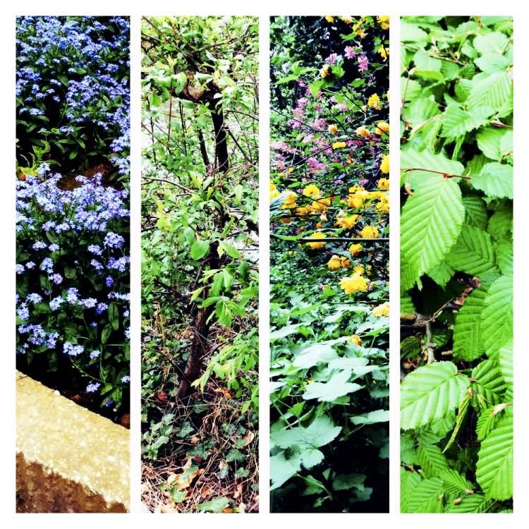 LOVAINA Flores y plantas