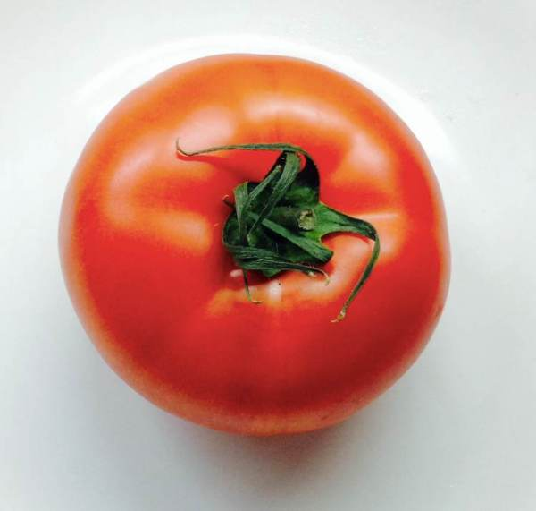 Tomate Mantelbleu